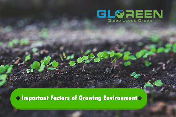IMPORTANT FACTORS OF GROWING ENVIRONMENT